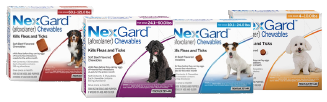 NexGard for dogs kills fleas and ticks with beef flavored chewable