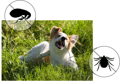 dogs with fleas and ticks can use NexGard